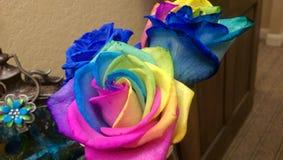 Arco iris Rose Imágenes de archivo libres de regalías