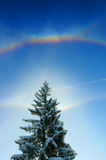 Arco iris sobre árbol de abeto Foto de archivo