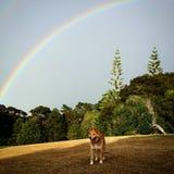 Arco iris sobre árboles Fotografía de archivo