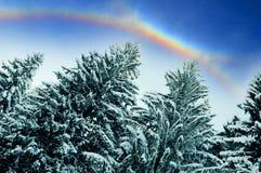 Arco iris sobre bosque   imagen de archivo