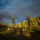 Arco iris sobre bosques cerca de la montaña de Jervfjellet, Noruega media imágenes de archivo libres de regalías
