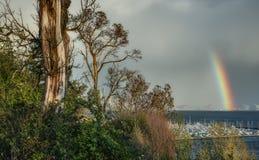 Arco iris sobre el agua con el tronco de árbol grande Fotos de archivo libres de regalías
