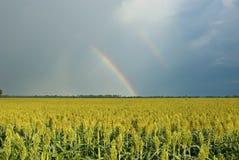 Arco iris sobre el campo del Milo (zahína) Fotografía de archivo libre de regalías