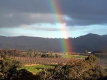 Arco iris sobre el viñedo - un cierto ruido fotos de archivo