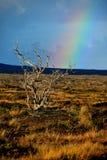 Arco iris sobre Hawaii Fotografía de archivo