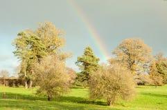 Arco iris sobre los tops del árbol Fotos de archivo libres de regalías