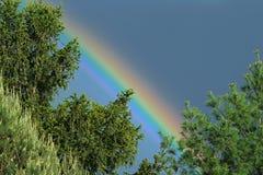 Arco iris y árboles de hoja perenne Fotografía de archivo