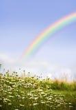 Arco iris y margaritas Fotos de archivo