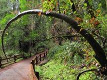 Arco natural del árbol en el bosque Imagen de archivo