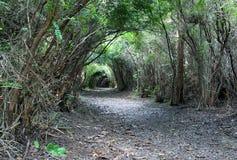 Arco naturale 02 dell'albero Immagini Stock Libere da Diritti