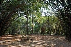 Arco naturale di bambù Immagini Stock