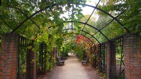 Arco no parque Imagens de Stock