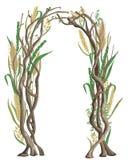 Arco rústico com ramos e cereais de árvore Cevada, trigo, centeio, arroz e aveia Design floral do vintage ilustração stock