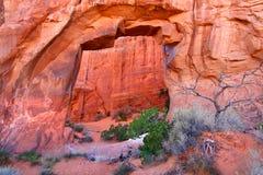 Arco Utah del árbol de pino imágenes de archivo libres de regalías