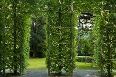 Arco verde dobro Imagens de Stock