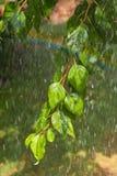 Arcobaleno con pioggia in primavera Fotografia Stock