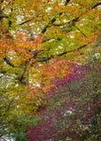 Arcobaleno dei colori di autunno negli alberi Fotografie Stock Libere da Diritti