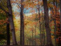 Arcobaleno del ` s di autunno dei colori Immagini Stock Libere da Diritti
