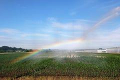 Arcobaleno ed irrigazione Immagine Stock