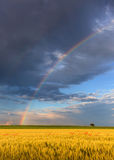 Arcobaleno nei campi agricoli con l'albero di solitudine Fotografia Stock