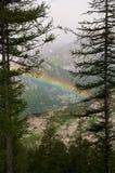 Arcobaleno nel bosco Stock Images