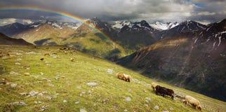 Arcobaleno nelle alpi di Ã-tztal Fotografia Stock