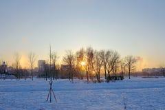 Arcobaleno soleggiato di inverno di alone nel parco di inverno Fotografia Stock
