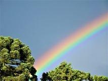Arcobaleno sopra i pini dell'araucaria nel Brasile immagine stock
