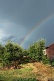Arcobaleno sopra il frutteto di frutta Fotografia Stock