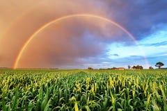Arcobaleno sopra il giacimento di grano, paesaggio della natura Fotografia Stock