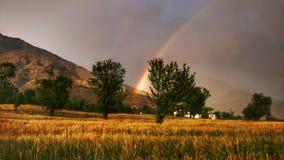 Arcobaleno sopra l'agricoltura indiana organica del grano del terreno coltivabile dorato del raccolto in Himalaya a distanza Fotografie Stock Libere da Diritti