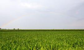 Arcobaleno sopra la campagna di Vercelli Fotografie Stock