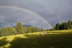 Arcobaleno sopra le montagne ed il pascolo alpino Immagini Stock