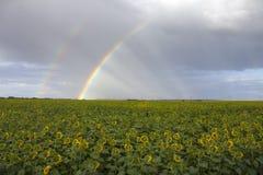 Arcobaleno sotto i girasoli Fotografia Stock Libera da Diritti
