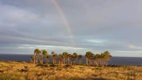 Arcobaleno in un boschetto della noce di cocco Immagini Stock Libere da Diritti