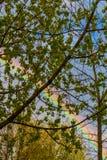 Arcobaleno variopinto dietro gli alberi della molla fotografia stock libera da diritti