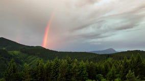Arcobaleno variopinto sopra il lasso di tempo verde della foresta archivi video