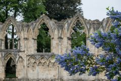Arcos en las ruinas de la iglesia del ` s de St Mary en York, Reino Unido, con los árboles en el fondo y las flores azules del ce Fotos de archivo libres de regalías