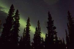 Arcoss da aurora boreal os céus enegrecidos de uma vida do Alasca que olha fixamente acima nas estrelas Aurora boreal através dos Fotos de Stock Royalty Free