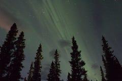 Arcoss för nordliga ljus de svärtade himlarna av ett alaskabo liv som stirrar upp på stjärnorna Nordliga ljus över de svarta gran Fotografering för Bildbyråer