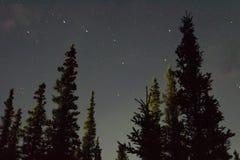 Arcoss för nordliga ljus de svärtade himlarna av ett alaskabo liv som stirrar upp på stjärnorna Nordliga ljus över de svarta gran Royaltyfri Bild