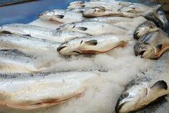 arctc λευκό θάλασσας σολομών της Ρωσίας ψαριών Στοκ φωτογραφία με δικαίωμα ελεύθερης χρήσης