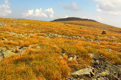 Arctic alpine vegetation on Mt. Washington, New Hampshire. Royalty Free Stock Image