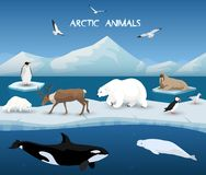 Arctic Animals Character and Background, Winter, Nature Travel and Wildlife. Collection of arctic animals in a background of arctic scenery vector illustration