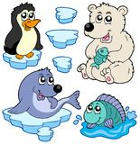 Arctic animals collection Stock Photos
