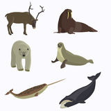 Arctic animals collection. Polar bear, seal, walrus, narwhal bowhead whale northern reindeer Royalty Free Stock Images