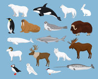 Arctic animals collection. With reindeer orca narwhal shark musk ox fox, wolf, puffin, tern, moose, walrus, penguin, beluga whale, hare, polar bear, harp seal vector illustration