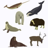 Arctic animals collection. Vector illustration stock illustration