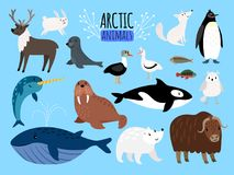 Arctic animals. Cute animal set of Arctic or Alaska vector illustration for education, penguin and polar bear. Fox and reindeer isolated on white background stock illustration