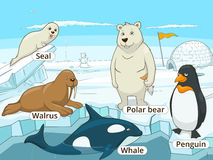 Arctic animals educational game for kids vector Stock Photo
